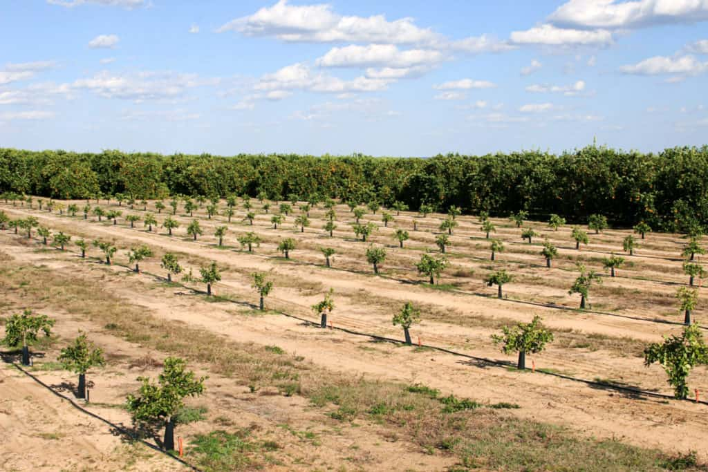 Finding a Certified Agricultural Irrigation Professional for your Irrigation Systems