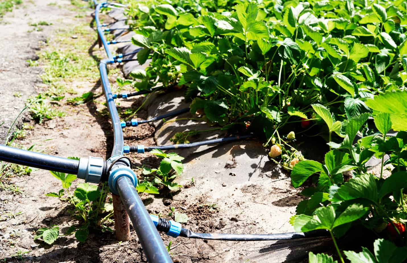 Smart Agricultural Irrigation Helps Conserve One of Our Most Precious Resources - Water