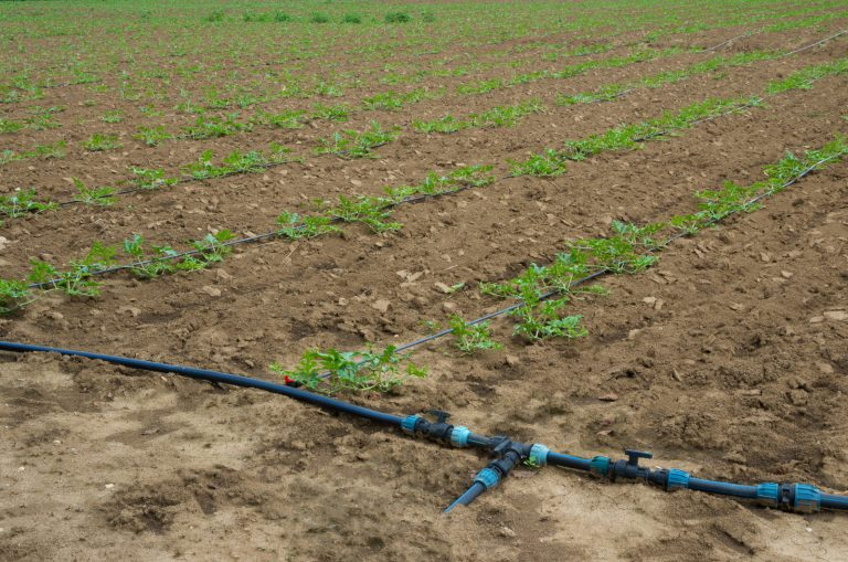 Smart Irrigation Tips in 2021